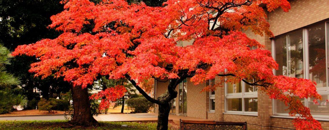 冬のキャンパス(Campus winter)